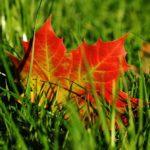 Sečení trávníku na podzim. Kdy sekat trávník naposledy?